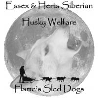 Essex & Herts Siberian Husky Welfare