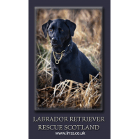 Labrador Retriever Rescue Scotland SCIO