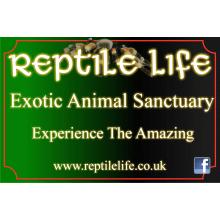 Reptile Life
