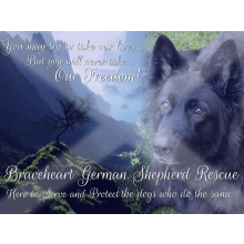 Braveheart German Shepherd Rescue