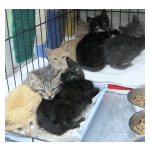 White River Cat Rescue