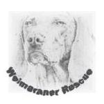 Weimaraner Rescue