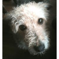 Islay Dog Rescue - Ayrshire