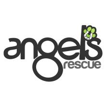 Angels Rescue, Macclesfield