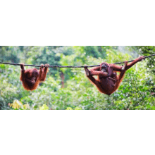 Outlook Expeditions Borneo in 2014 - Aliese Kelly