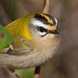Court of Ornithology