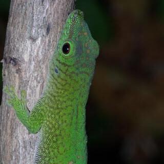 Madagascar 2020 - Daniel Verburg
